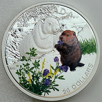 Canada 2016 $20 Baby Animals: Woodchuck 1 oz 99.99% Pure Silver Color Proof Coin