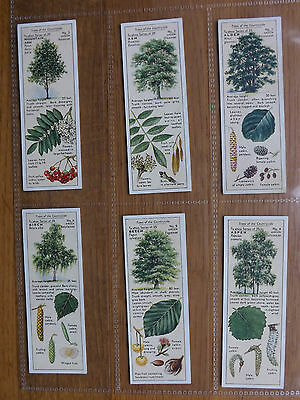 TREES OF THE COUNTRYSIDE  - TYPHOO - Series of 25 - 1937 - EX/EX+