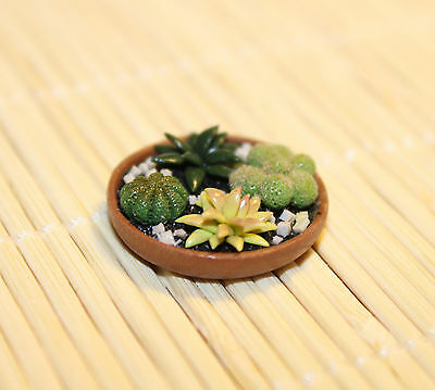 More Cacti Handmade Dollhouse Miniature