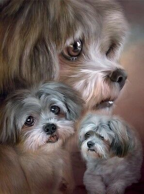 3D Picture Dogs Lhasa Apso Study Size 39 x 29 cm approx New