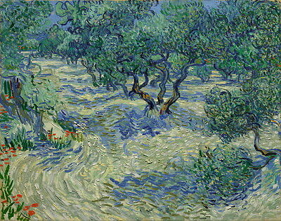 Vincent Van Gogh Olive Orchard Giclee Canvas Print Paintings Poster Reproduction
