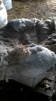 Raw  Sheep Fleece Swaledale