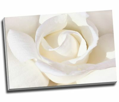 "WHITE ROSE Floral Canvas Print Wall Art 30x20"" A1"