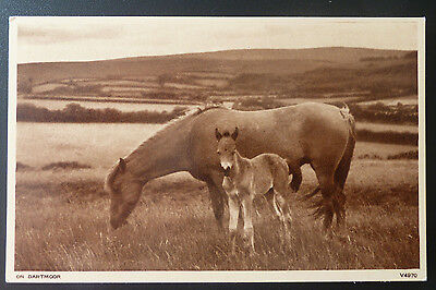Vintage Horse Postcard-  Real Photo of Mare and Foal on Dartmoor