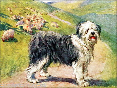 1906~V.Stokes~Old English Sheepdog Puppy Dog~Flock of Sheep~ NEW Lge Note Cards