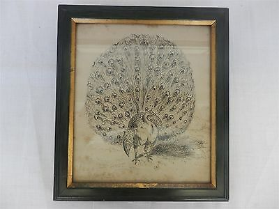 "INK DRAWING of a Peacock signed ""WHW"" & Dated 23.10.11, Framed 9""x 8"""