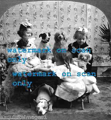 1906 Photo~Girl's Tea Party-Pit Bull Terrier~Poodle~Many Dogs~NEW Lge Note Cards