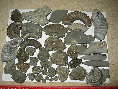 Great Collection of Jurassic Coast Fossils Ammonites, Belemnites, Pyrite