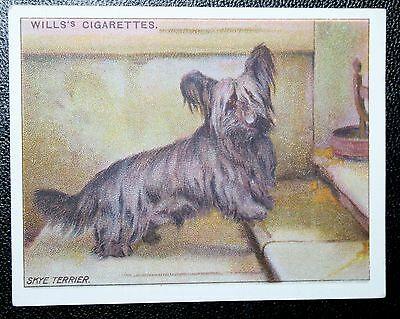 SKYE TERRIER   Original 1914 Vintage Colour Card  VGC