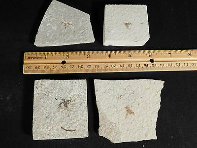 Lot of FOUR Neat! 100% Natural 50 Million Year Old Insect Bee Fossils Wy 264gr