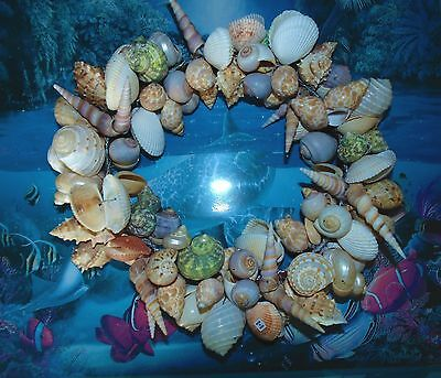 """12""""  Real  Mixed Sea Shell Wreath Wired To Ring  Beach Decor Tropical"""