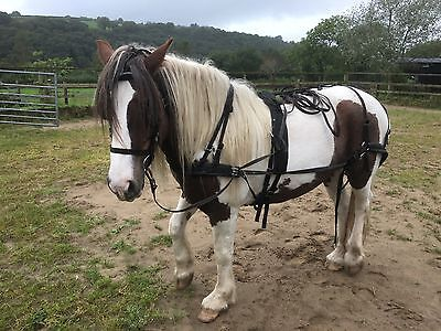 Harness For Pony 13hh-14hh