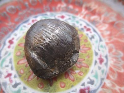 Nature stone ancient fossil shells rare rock bring good lucky charm power