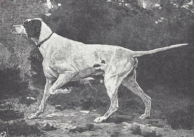 1886 Antique Magazine Article, Typical Dogs. Pointers.  Pointer. 7 illustrations