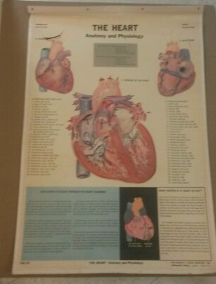 Vintage Cram Skeleton and Heart Chart CA-12 For School Wall or Home