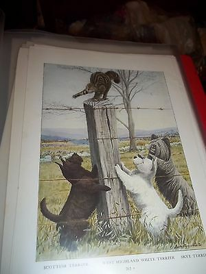 Louis A Fuertes Skye Scottish West Highland Terriers bookplate from 1919 Nat Geo