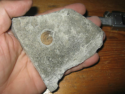 Nice Calcite Promicroceras Ammonite Fossil Charmouth