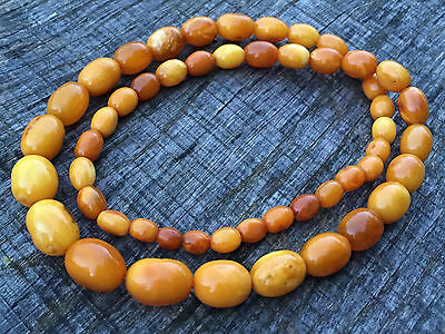 An Old Antique Natural Baltic Butterscotch Amber Beads Necklace