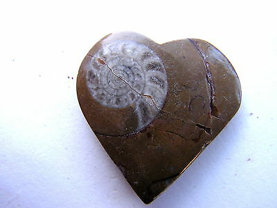 Heart Shaped Fossil Early Ammonite Xmas Present GIFT