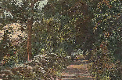 Country Lane, BERMUDA - Weiss Series