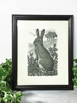 Beautiful Vintage Black & White Rabbit Print Brown Hare 1949 By C F Tunnicliffe