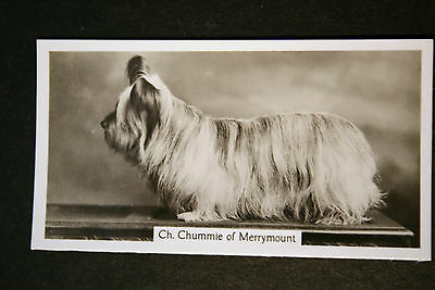 Skye Terrier   Champion  1930's Vintage Photo Card  VGC