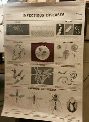 Vintage Cram Infectious Dis and Endocrine Chart CA-10 & CA -23 For Wall or Home