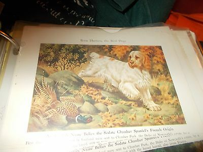 Walter A. Weber Clumber Spaniel bookplate 1947 National Geographic Magazine