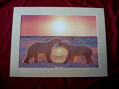 Two Polar Bears in the Golden Light Photo by Kirk Yarnell 1999