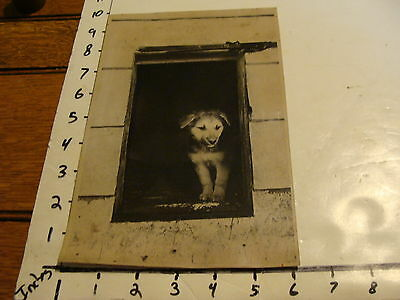 """Vintage B & W dog photo: Sweet photo of puppy """"Looking for a home"""""""