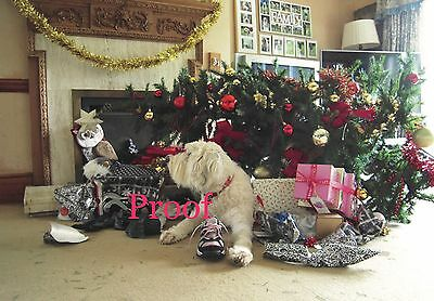 Old English Sheepdog Charity Christmas Cards - 3 x packs of 10 cards