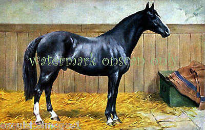 Antique Art~Black Racehorse in Stable~NEW Lg Note Cards