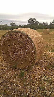 Oaten Hay 5' round bales. Great horse, cattle, sheep, livestock feed