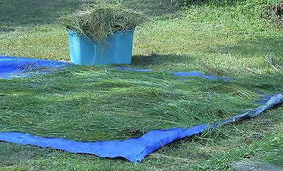 12 pounds Florida Longleaf Pine Needles Basket Coiling Fresh Green 18 inches