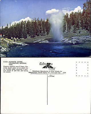 Riverside Geyser Yellowstone National Park 1950s Mike Roberts postcard