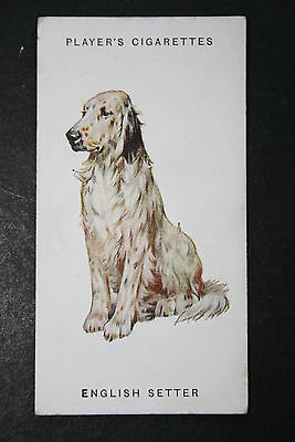 English Setter    Early 1930's Original Vintage Illustrated Card