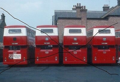 Bus Photo Of A Line Of Dms On Photograph Picture London Daimler Fleetline.