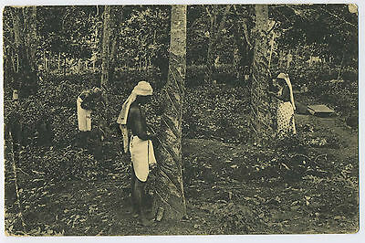 Ceylon Tapping Rubber Trees Natives Working on Rubber Trees 1908 Postcard J