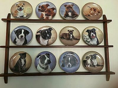 Danbury Mint Staffordshire Bull Terrier ornamental plate collection