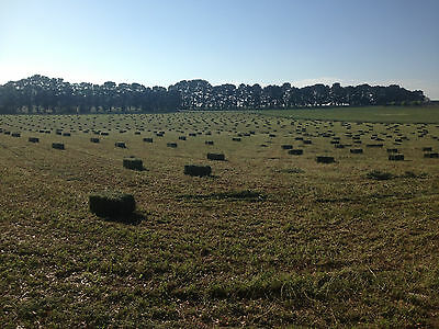 Lucerne Hay Small Squares 2nd Cut Top Quality -  Orange NSW - Can Deliver