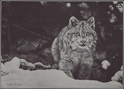 "CHARLES FRACE` ~ ""THE CHASE"" ~ 9½ x 13¼"" REPRODUCTION PRINT/FRACE` PAMPHLET"