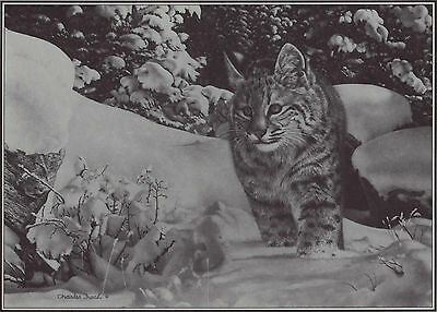 "CHARLES FRACE` ~ ""THE QUEST"" ~ 9¼"" x 13"" REPRODUCTION PRINT/FRACE` PAMPHLET"