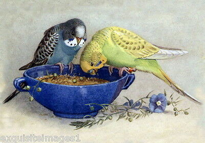 Antique Art~Green and A Blue Parakeet~Budgerigars~Blue Bowl~NEW Lge Note Cards