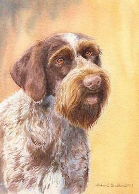 """""""German Wirehaired Pointer Head Study II"""" A Limited Edition Print"""