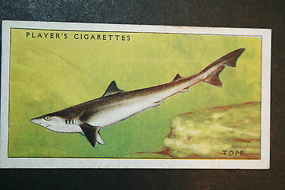 Tope      Small Shark     Original 1930's Vintage Illustrated Card   VGC