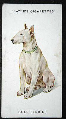 ENGLISH BULL TERRIER     Original 1930's Vintage Illustrated Card