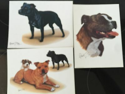 Staffordshire Bull Terrier Prints By Robert J May