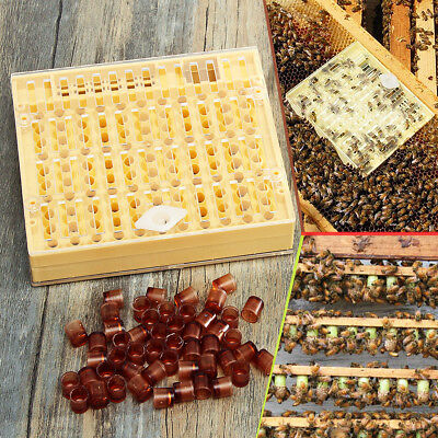 Bee Queen Rearing System Larva Rearing Box Case + 50 Cell Cup Kit For Beekeeping