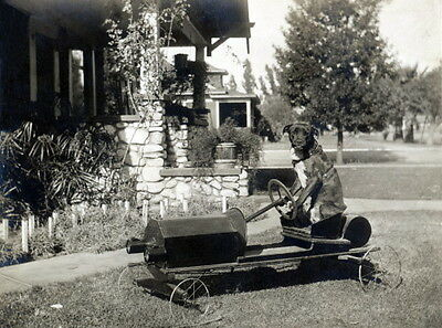 1920s Photo~Pit Bull Terrier Dog Steering Child's Pedal Car~NEW Large Note Cards