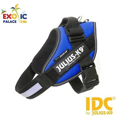 Julius-K9 Idc Powerharness Blue Pettorina Blu Per Cane In Nylon Resistente Dog